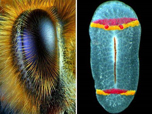Pregedate slike iz ?lanka: Slike uslikane uz pomo? mikroskopa