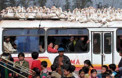 Pregedate slike iz ?lanka: Transport