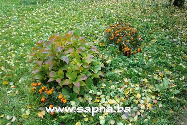 Pregedate slike iz članka: Došla je jesen
